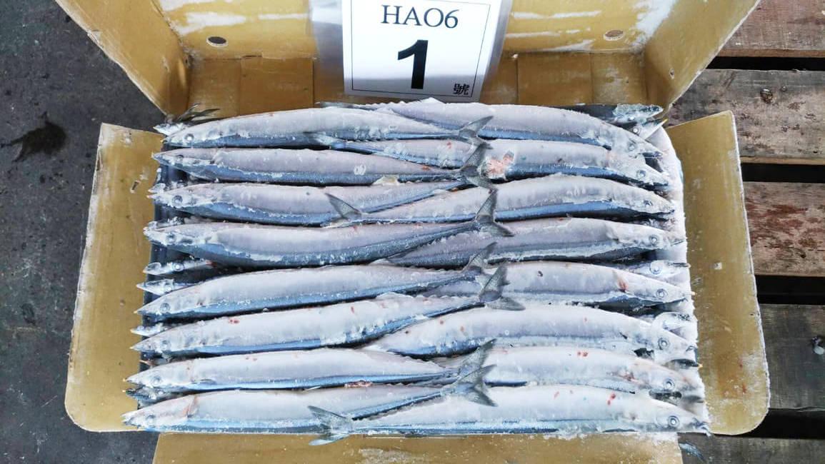 2017秋刀魚size1_171206_0011-e1513589267736.jpg