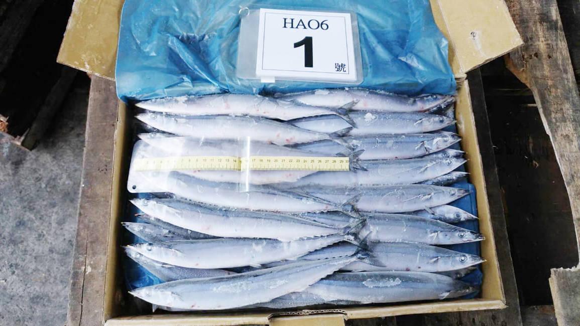 2017秋刀魚size1_171206_0014-e1513589249272.jpg